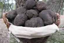truffes-noires